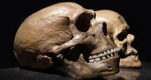 Неандертальцы пользовались естественными болеутоляющими