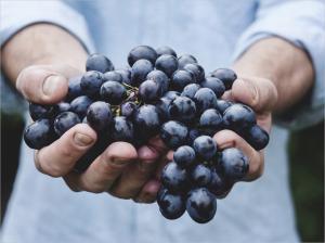 Экстракт косточек винограда может увеличить срок службы композитных пломб